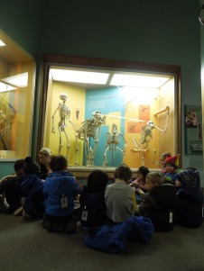 Four year olds visit skeletons at the National Museum of Natural History during a study of the human body in their Invisible Man Unit.