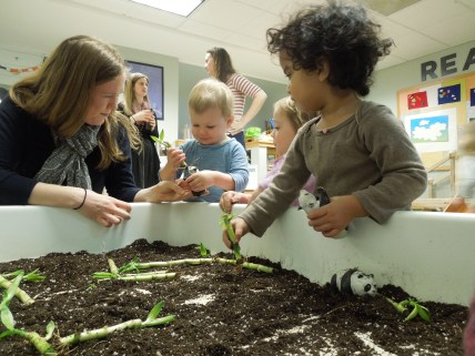 Toddlers learning about pandas explore dirt and real bamboo in the sensory table.