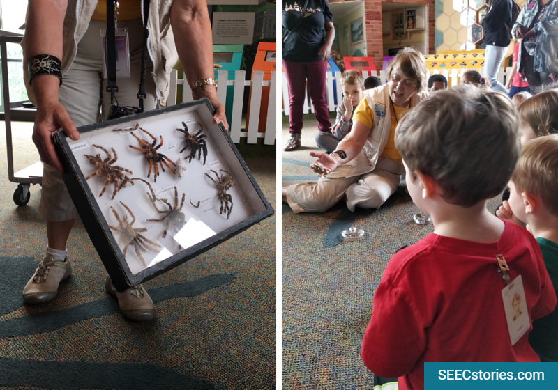 toddlers, insect zoo, smithsonian, spiders,