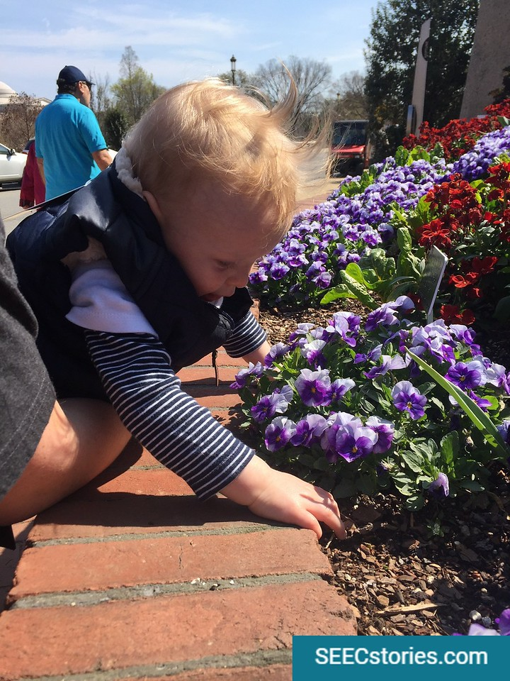 Child leaning over brick wall to smell flowers